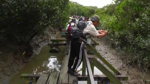 香港マイポ湿地①2013-04-06_171830(1)
