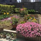 橋本邸のお庭